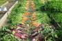 Uskim gredicama do visokih prinosa povrća