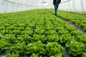 Dodeljeno pet miliona dinara somborskim poljoprivrednicima