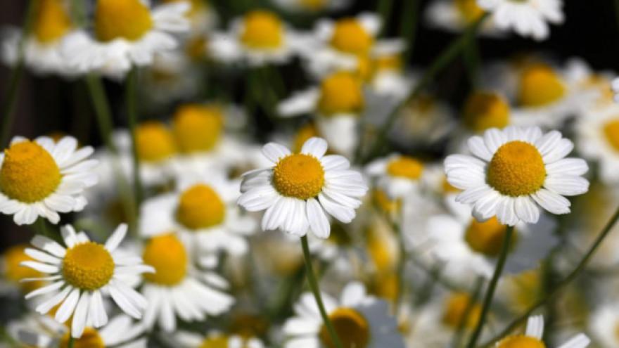 cvjetni tucci špricatiseksati se pod tušem
