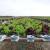 Kako se proizvodi salata u hidroponu, a kako NFT tehnologijom?