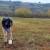 Mapiranjem i uzorkovanjem napuštenog državnog zemljišta do bolje iskoristivosti