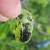 Visoka vlažnost vazduha aktivirala bolesti - plamenjača na krompiru i vaši na voću