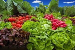 Nova uredba o ekološkoj proizvodnji