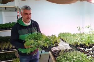 Uzgoj ispod Kvatrića: S urbane eko farme Vesela motika stiže mikropovrće