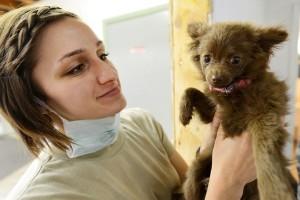 Četiri istine i zablude o nezi i zdravlju pasa