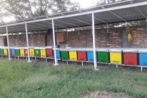 Pčelarstvo sve više dobija na značaju u svetu: Da li je tako i u Srbiji?!