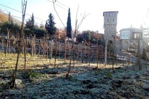 Monasi manastira Tvrdoš sačuvali tradiciju proizvodnje vina iz 16. vijeka, a sada se piju u 16 zemalja