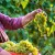 Prosječni hrvatski vinogradar ima samo pola hektara vinograda