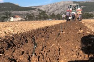 Obradili vjerojatno najveću zemlju u Imotskom kraju, najveći dio vinograda činit će kujundžuša