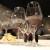 Domaća vina i alkoholna pića imaju budućnost, Sabatina je najbolji dokaz za to