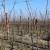 Pravilna priprema tla za podizanje vinograda čini proizvodnju isplativijom