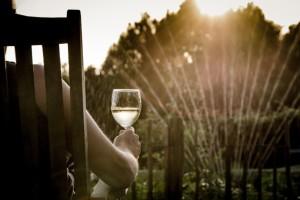 Legaliziranje kanabisa izgurat će potrošnju vina?