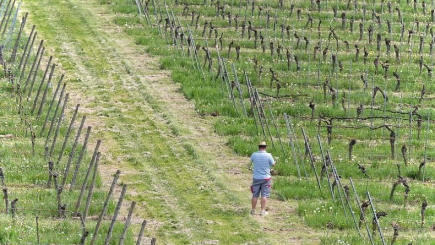 korlat, benkovac, wine, vineyards, zadar, croatia, dalmatia, www.zadarvillas.com