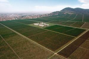 Plantaže Vršačkih vinograda dobijaju nove zasade