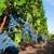 Kisela trulež predstavlja novi problem za vinogradare - suzbijte uzročnika octenu mušicu ploda!