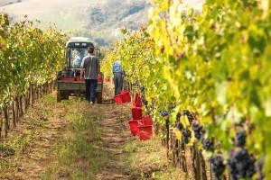 Širenje vinogradarske proizvodnje u Posavini