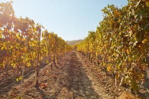 Jesenja obrada zemljišta u vinogradu