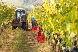 Domaći vinari nisu ravnopravni sa onima iz regiona, zato im je potrebna podrška države