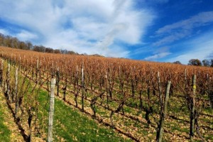 Preventivnim mjerama zaštititi vinograd od niskih temperatura