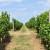 Objavljen popisproizvođača s utvrđenom kvotom vina za destilaciju