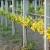 Kreće proljetno buđenje - zaštitite vinovu lozu od korova!