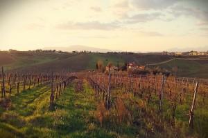 Vina iz topličkog kraja osvajaju svet