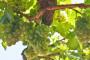 Ekološki uzgoj vinove loze