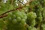 Sustav obrane od poplave za nadinske vinograde