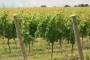 Bodren priprema gradnju ekskluzivnog vinskog kompleksa