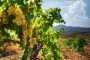 Vinogradarski registar - proizvodnja vina u 2013.