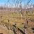 Loznički savetodavci pozivaju mlade da se okrenu uzgoju vinove loze