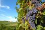 Prijedlozi za spas vinogradarstva i vinarstva