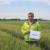 Pšenica Viriato šampion pokusa, svojim brkovima iritantno djeluje na divljač