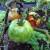 Virus pjegavosti i uvenuća rajčice te virus mozaika krastavca čine velike štete, kako ih suzbiti