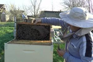 Uprkos alergiji, zavoleo pčele i pčelarenje