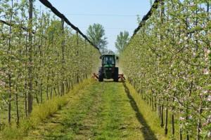 Zašto je važna obrada zemljišta u voćnjacima? Koje greške izbeći?
