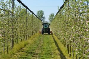 Zašto je važna obrada zemljišta u voćnjacima? Koje greške izbjeći?