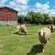 Prošle godine zabilježen veći broj ovaca i koza, no manji broj isporučitelja mlijeka