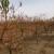 Jesenje đubrenje važna mera kod uzgoja drvenastih voćaka