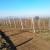 Nenad Magazin: Osetljive voćne vrste saditi u višim predelima, otpornije u ravnici