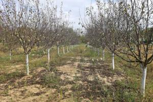 Priprema zemljišta za podizanje zasada voća
