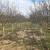 Priprema zemljišta za podizanje nasada voća