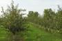 Proljetna sadnja voćaka