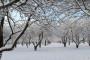 Utjecaj niskih temperatura i mraza na uzgoj voćaka