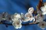 Zbog hladnoće i mraza ogromne štete u voćnjacima