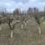 Zaštita voćaka od kasnih proljetnih mrazeva