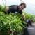 Krenulo od hobija pa čili papričicama postao najljući poljoprivrednik