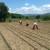 Vranje raspisalo konkurs za dodelu poljoprivrednih subvencija