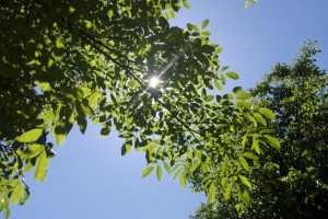U petak od 32°C do 34°C!