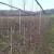 Padavine tokom cele nedelje - zaštitite mlade voćke od glodara